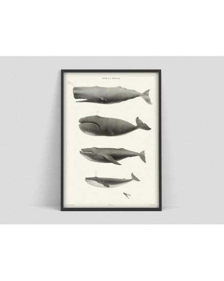 Various selection - Plakat World's Whales - Plakaty Skandynawskie