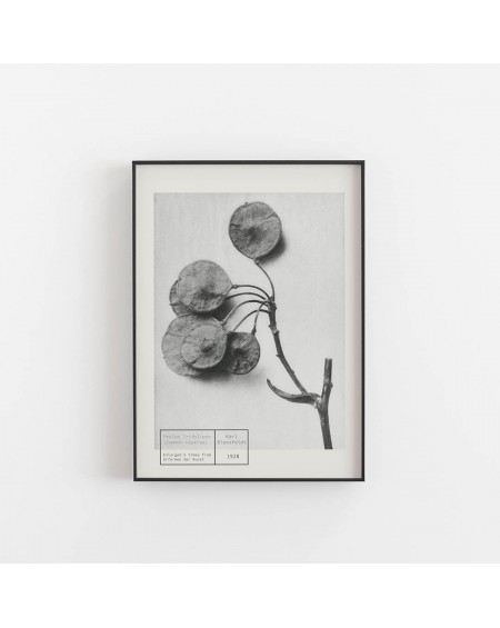 Empty Wall - Plakat Karl Blossfeldt - Common Hoptree - Plakaty Skandynawskie