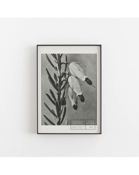 Empty Wall - Plakat Karl Blossfeldt - Winter Heart - Botanika